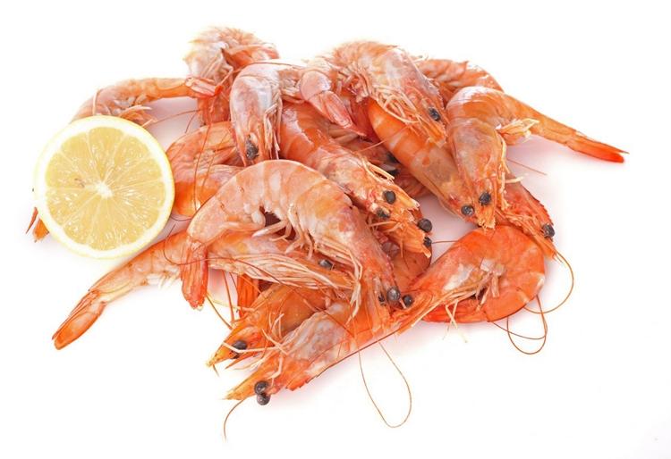 Shrimps Garnelen Unterschied