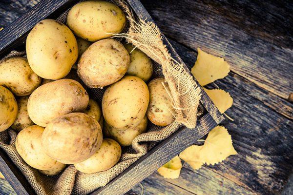 Kartoffeln eignen sich abhängig von ihrem Stärkegehalt für die Zubereitung unterschiedlicher Gerichte. ©welcomia/freepik