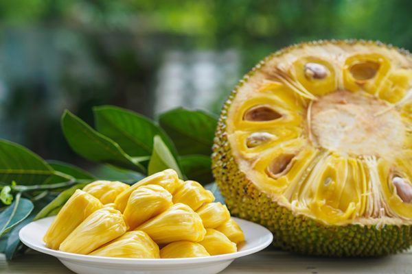 Jackfruit-Jackfrucht