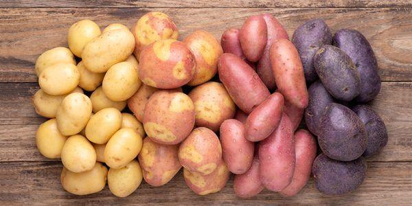 Verschiedene Sorten der Kartoffel